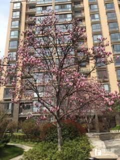 (城西)润恒第1城11楼好楼层 回迁房