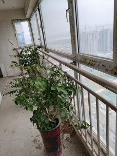 (城东)汇龙大厦5室2厅2卫258m²(毛坯房)